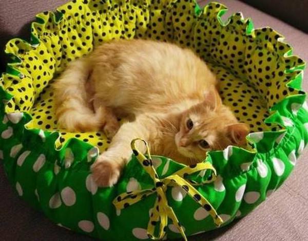 Рейтинг лучших лежаков для кошек