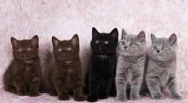Рейтинг лучших пород кошек