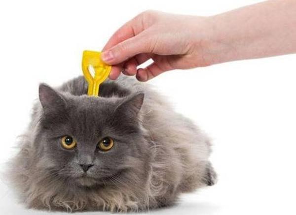 Лучшие лекарства от паразитов для кошек
