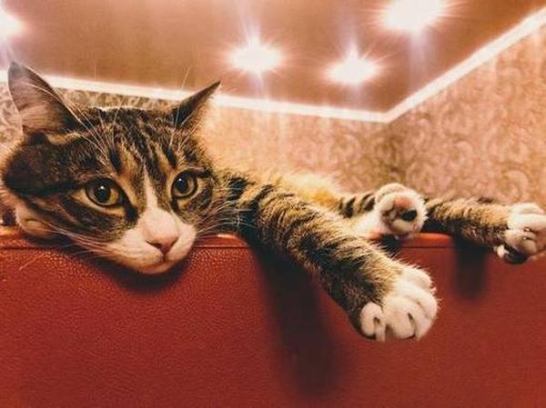 Советы по выбору лучших наполнителей для кошачьего туалета
