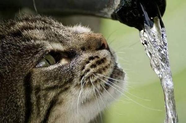 Рейтинг лучших шампуней для кошек и котов