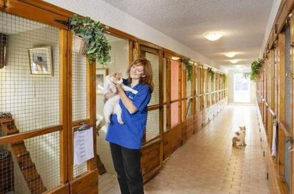 Лучшие гостиницы для животных в Челябинске
