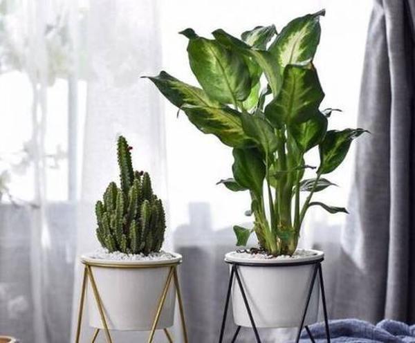 Самые неприхотливые комнатные растения год