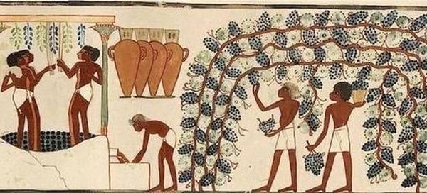 Лучшие сладкие вина ТОП 2020