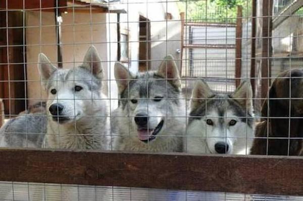 Рейтинг лучших питомников собак в Уфе