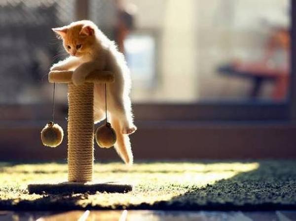 Рейтинг лучших игрушек для кошек