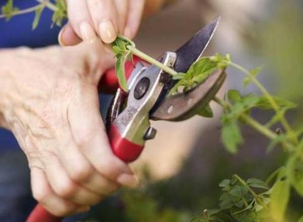 Лучшие садовые секаторы для обрезки кустарников