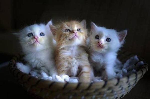 Обзор переносок для кошек и маленьких собак