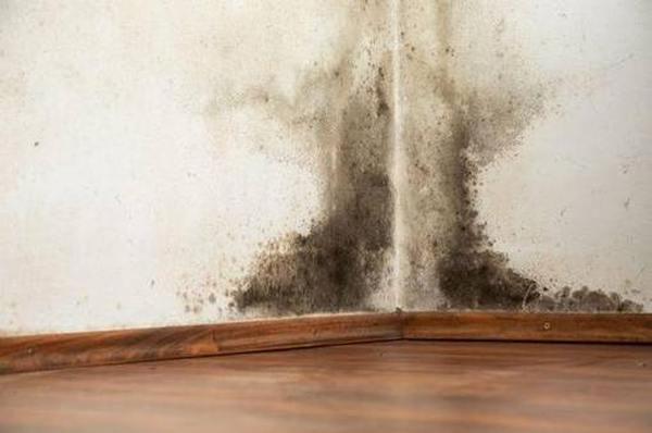 Как выбрать средства от плесени на стенах