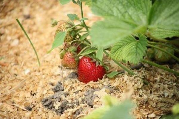 Лучший грунт для растений