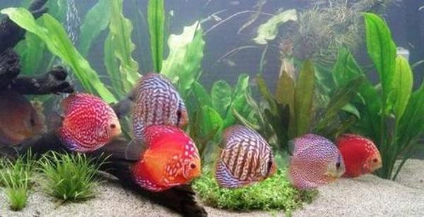 Обзор фильтров для аквариумов