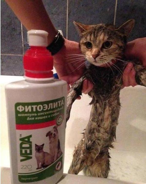 Лучшие шампуни от блох для кошек