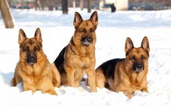 Лучшие питомники собак в Москве