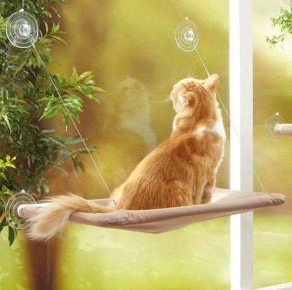 Лучшие лежанки для кошек