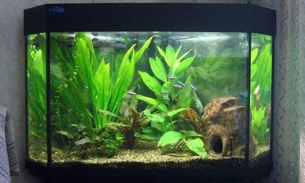 Рейтинг лучших производителей аквариумов