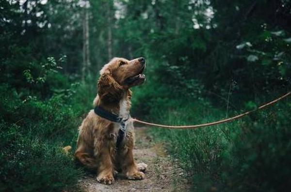 Рейтинг лучших средств от глистов у собак