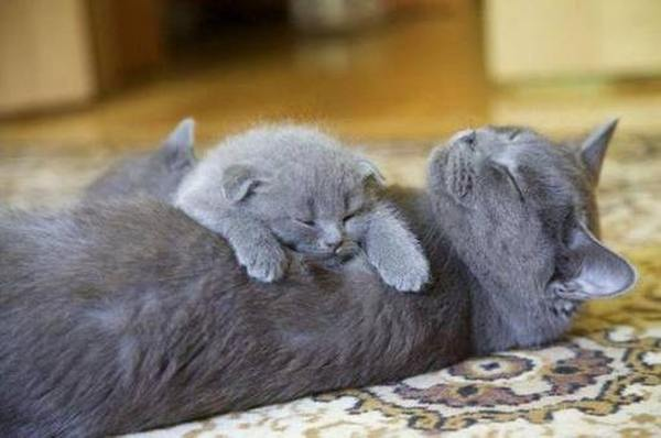 Обзор кормов для взрослых кошек и котят
