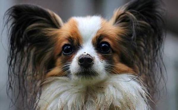 Лечебный Шампунь для собак