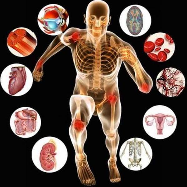 Рейтинг книг по анатомии и физиологии человека