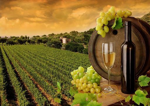 Рейтинг лучших вин Италии 2021